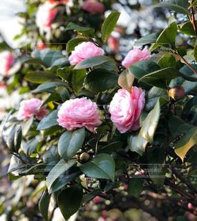 近くの花のアップの写真・画像素材[1066573]