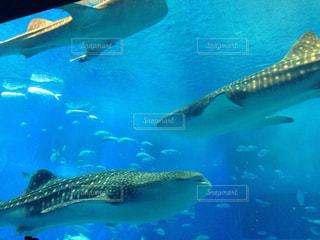 水面下を泳ぐ魚たちの写真・画像素材[1065620]
