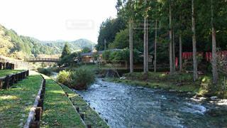 森の川に架かる橋の写真・画像素材[1067462]
