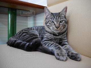 猫の写真・画像素材[1077782]