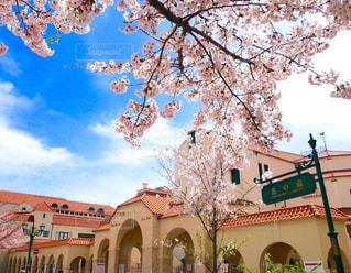 桜と大劇場の写真・画像素材[1093503]