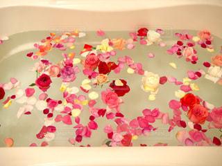 誕生日プレゼントにもらったバラ風呂の写真・画像素材[1106260]