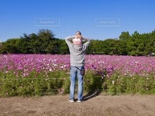 肩車でコスモスを見るの写真・画像素材[2704621]