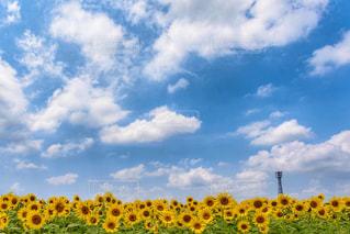 夏の空の写真・画像素材[1066795]