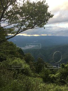 背景の木と大規模なグリーン フィールドの写真・画像素材[1065691]