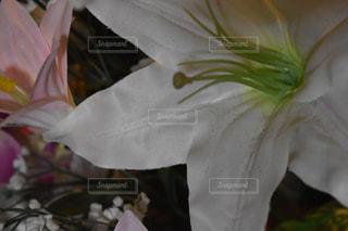 近くの花のアップの写真・画像素材[1066710]
