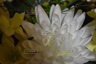近くの花のアップの写真・画像素材[1066711]