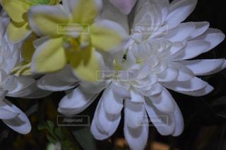 近くの花のアップの写真・画像素材[1066712]