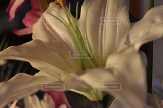 花を持っている人の写真・画像素材[1066713]