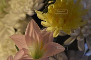 近くの花のアップの写真・画像素材[1066716]