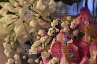 近くの花のアップの写真・画像素材[1066717]