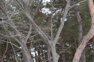 木の枝の写真・画像素材[1068928]