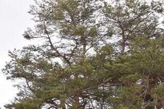 近くの木のアップの写真・画像素材[1068932]