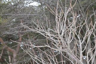 木の写真・画像素材[1068933]