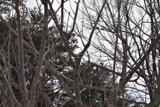 木の写真・画像素材[1068936]