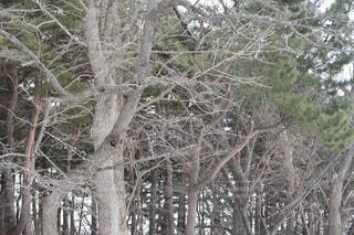 木の写真・画像素材[1068940]