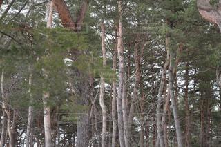 木の写真・画像素材[1068986]