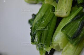 小松菜の写真・画像素材[1069177]