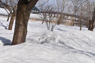 雪と木の写真・画像素材[1069829]