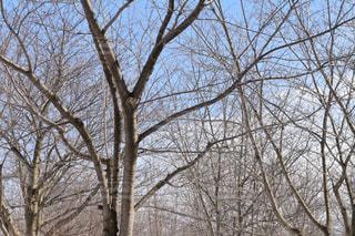 近くの木のアップの写真・画像素材[1069946]