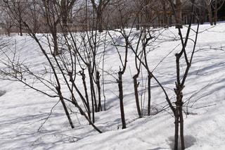 雪に覆われた木の写真・画像素材[1069998]