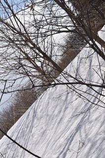 雪と木の写真・画像素材[1070043]