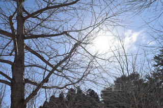 日差しと木の写真・画像素材[1070052]