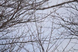 近くの木のアップの写真・画像素材[1070197]