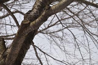 近くの木のアップの写真・画像素材[1070201]