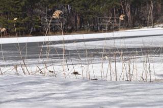 雪に覆われた湖の写真・画像素材[1070202]