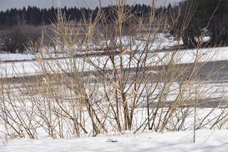 雪と自然の写真・画像素材[1070206]