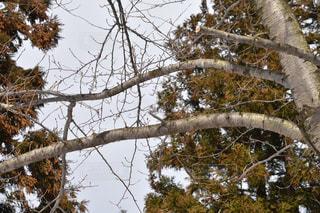 木の写真・画像素材[1070214]