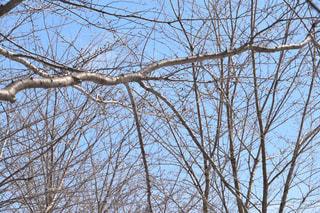 木の写真・画像素材[1070219]