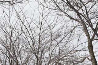 木の写真・画像素材[1070231]