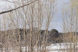 雪に覆われた木の写真・画像素材[1070244]