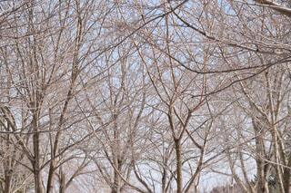 木の写真・画像素材[1070270]