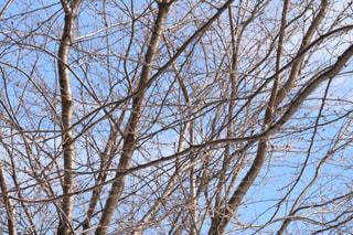 近くの木のアップの写真・画像素材[1070277]
