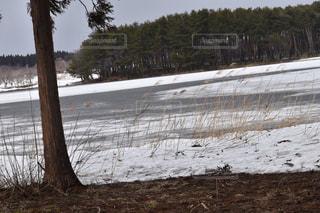 地面の雪の木の写真・画像素材[1070294]