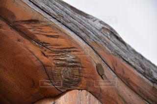 木のアップの写真・画像素材[1070295]