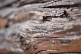 近くの木のアップの写真・画像素材[1070298]