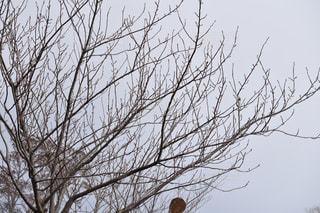 近くの木のアップの写真・画像素材[1070309]