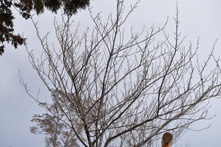 近くの木のアップの写真・画像素材[1070310]