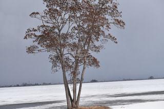 雪に覆われた木の写真・画像素材[1070315]