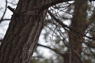 近くの木の枝の写真・画像素材[1070375]