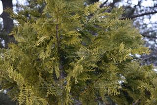 近くの木のアップの写真・画像素材[1070383]