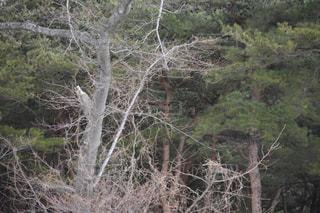 木の写真・画像素材[1070407]