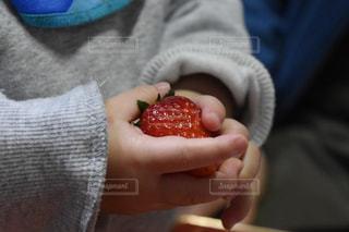 赤ちゃんの手といちごの写真・画像素材[1076776]