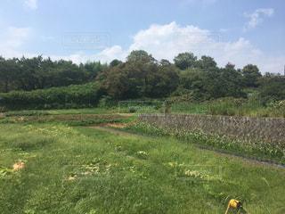 近くに緑豊かな緑のフィールドのの写真・画像素材[1066240]