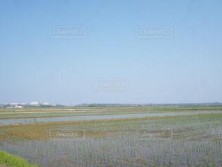 草のフィールドの写真・画像素材[1066669]