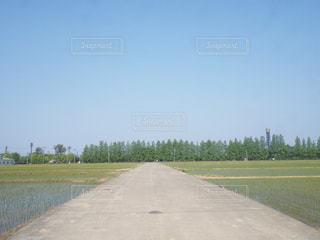 草と木と空の道の写真・画像素材[1066673]